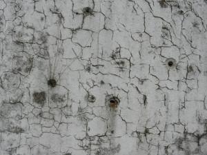 cs_21_muro-della-scuola_2014-02-28_DL1